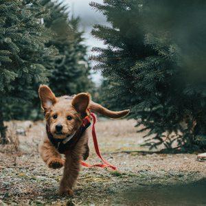 Online Puppycursus - Hondengedragscoach Lisse van de Groep